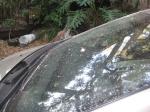 Ash fall on my car Saturday morning